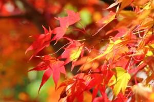 秋の雨の表現の仕方